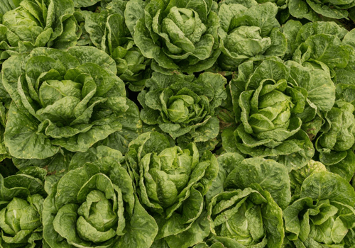 Blockchain isn't just For Bitcoin! Walmart requires lettuce, spinach suppliers to join Blockchain to improve Food Safety